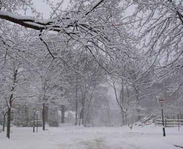 SnowTreesForest3